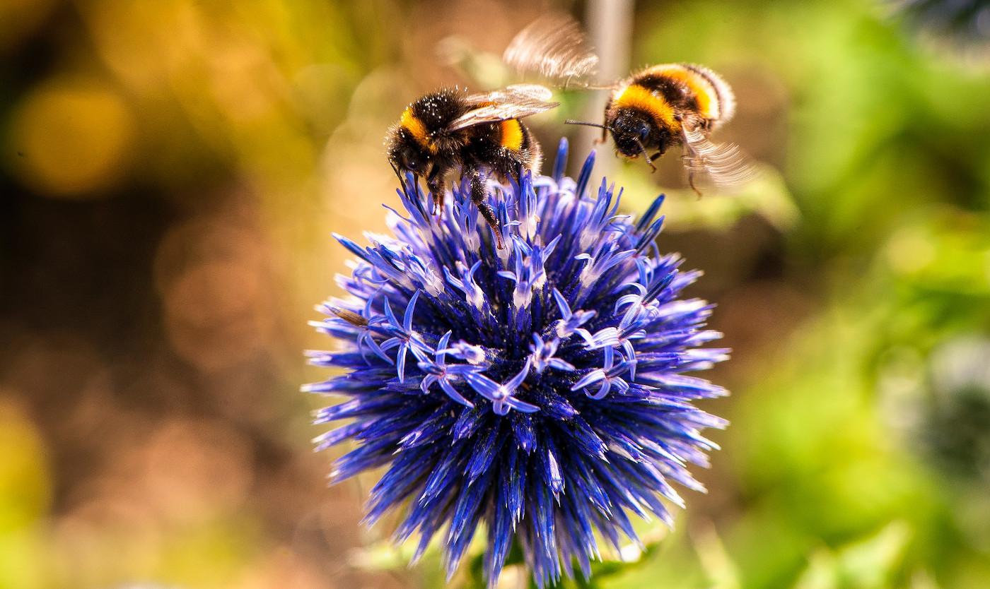 animal bees bloom blooming 553251 1